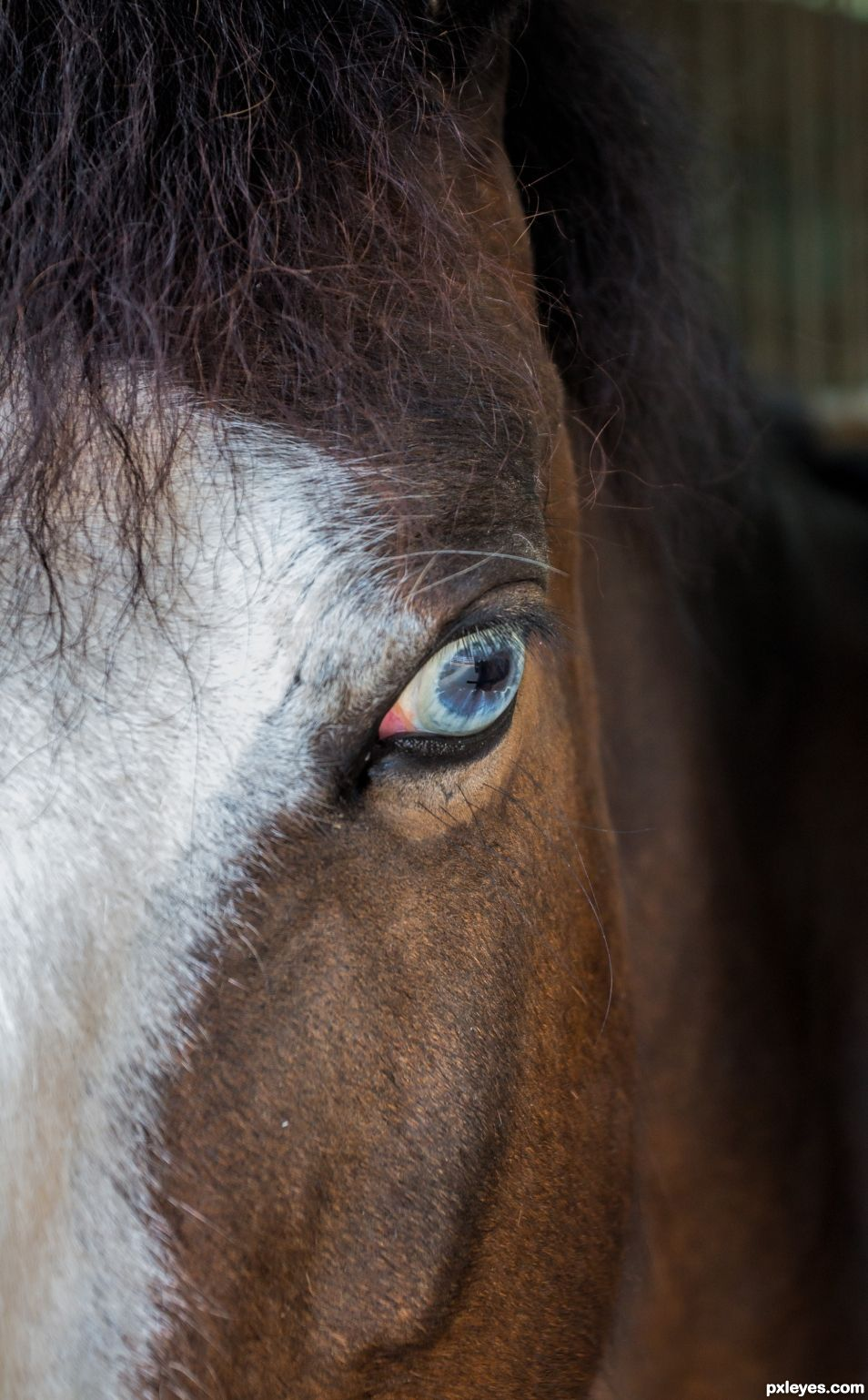 Unusual eye colur