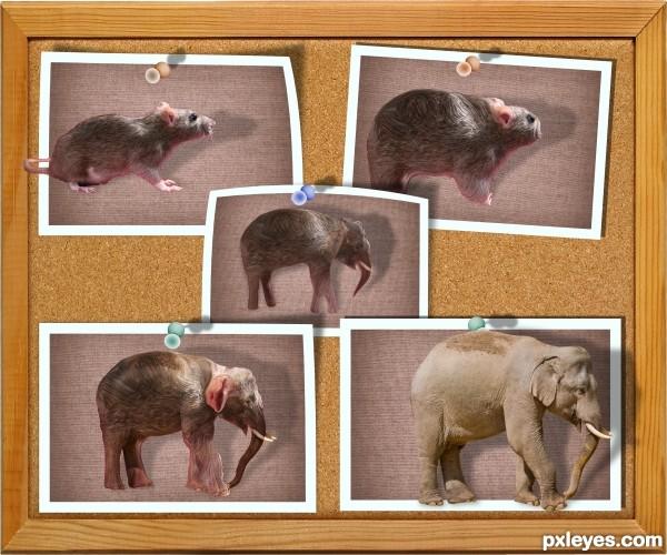 Ratmorph Elephant