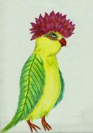 Colorfulbird
