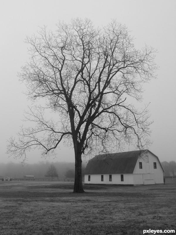 Old barn, lone tree