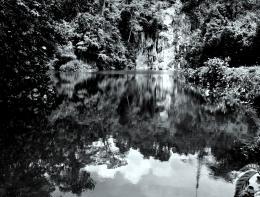 JunglePool