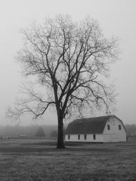 Oldbarnlonetree
