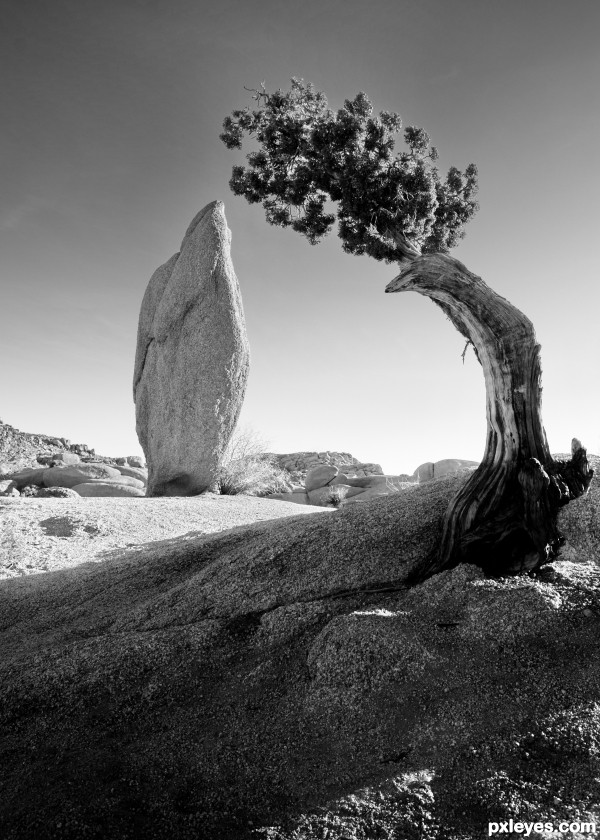 Black And White Photographygraphers Represented By The Ansel Adams Gallery