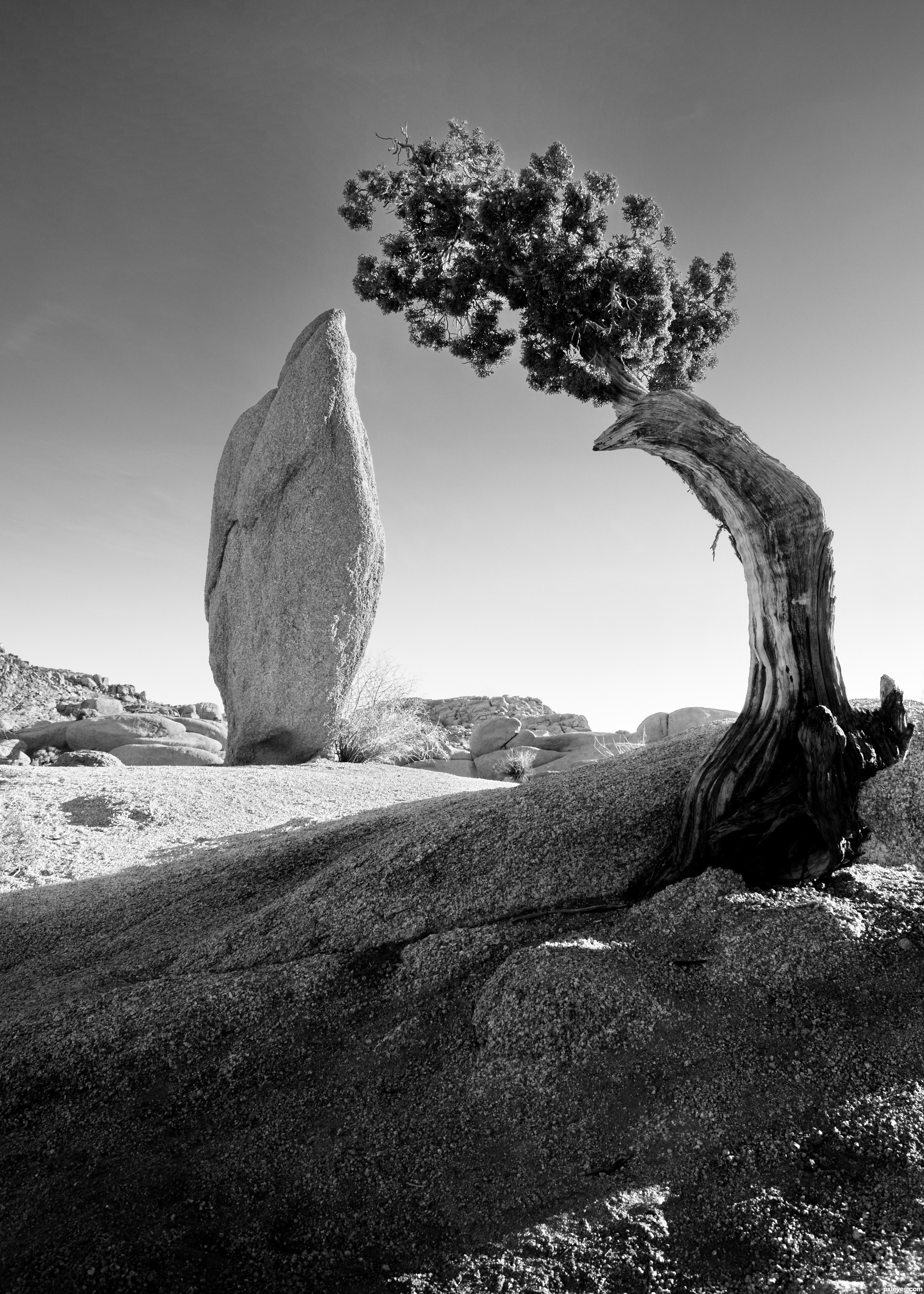 Ansel adams bw 3 photography contest 37 entries