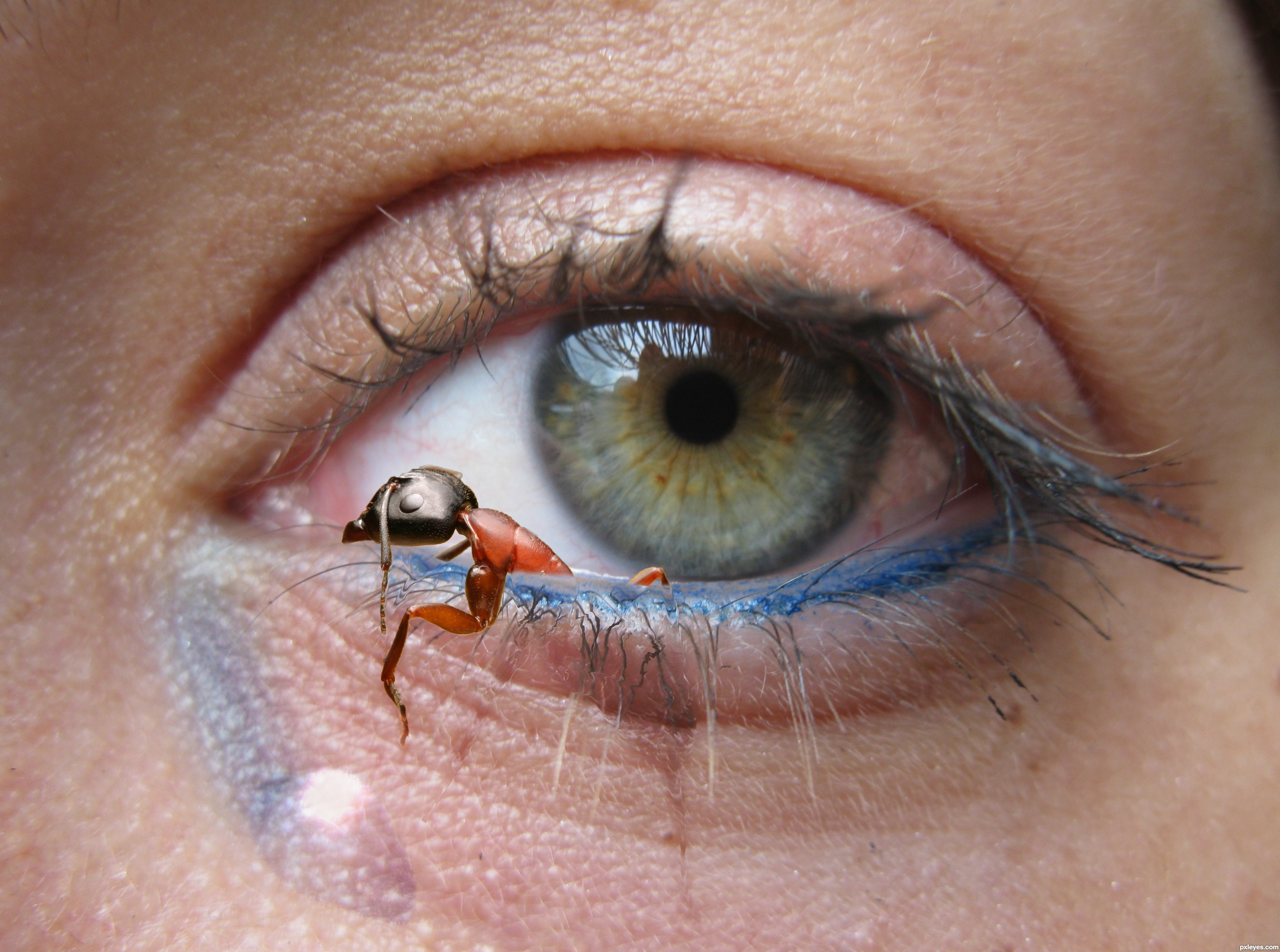 Eye-Ant picture... Eye