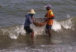 Harvesting the Sea