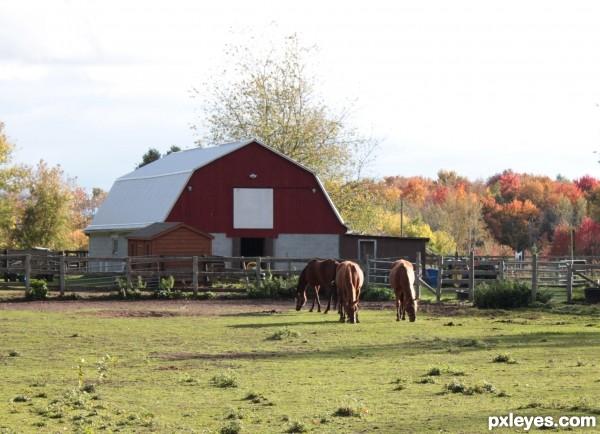 Fall Setting on the farm