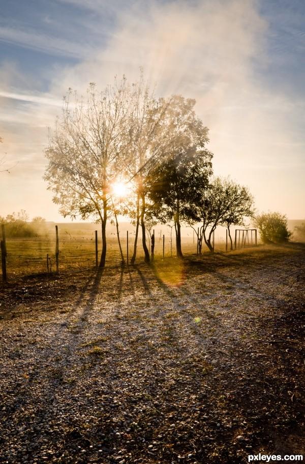 Sun, smoke and tree