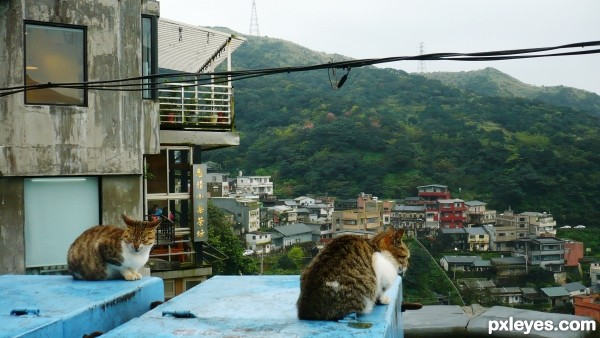2 emo cats