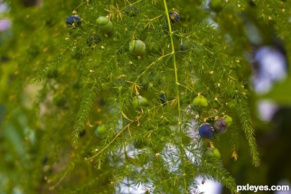 Natures Xmas Tree