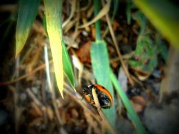 Ladybugladybugflyaway