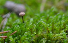 MushroomintheMoss