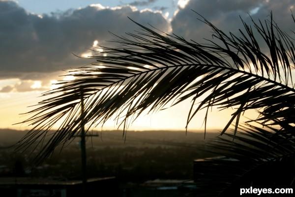 Palm Leaf Newcastle