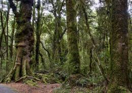Oldforest