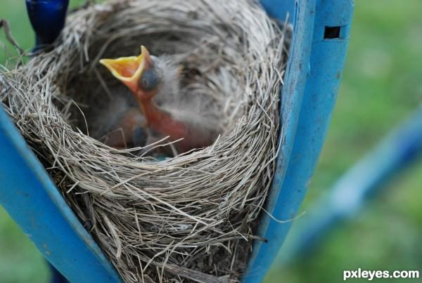 Hungry Baby Bird