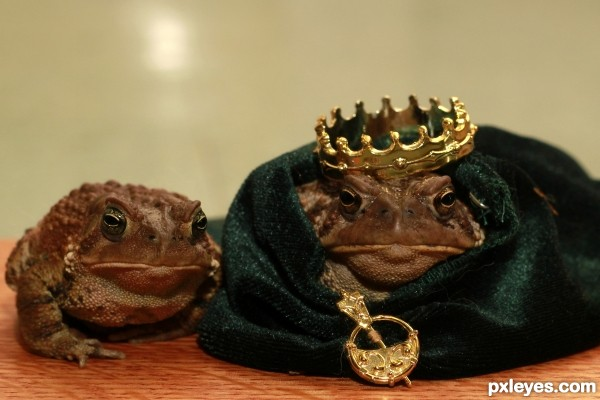 King Toad and His Queen
