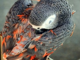 Birdnap