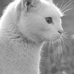 CatsPortrait