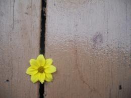 Lonelyflower