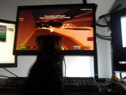 Pixie the kitten, following the game