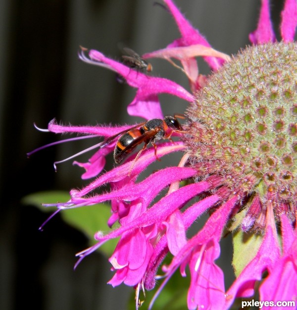 A wasp and a fly