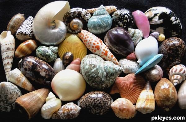 My collection of seashells