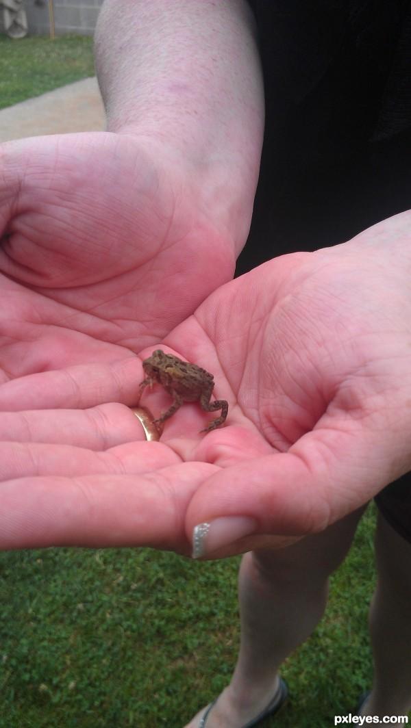 little froggy