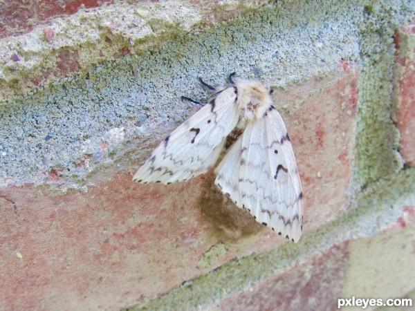 moth:D