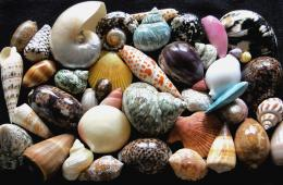Mycollectionofseashells