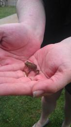 littlefroggy