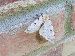 mothD