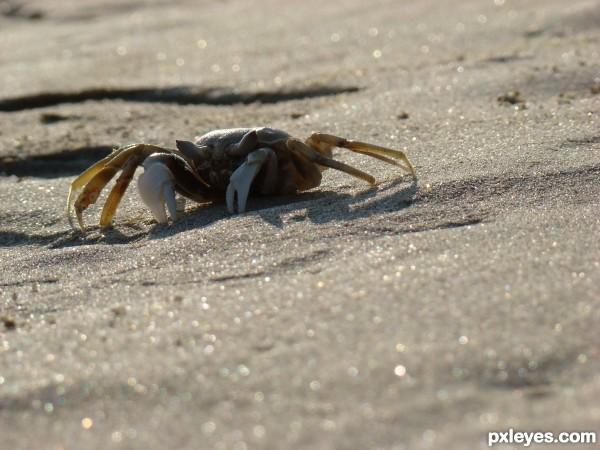 Crab on Sparkling Sand