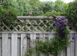 LoveBirdssittingonthefence
