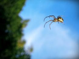 SpideronaWeb