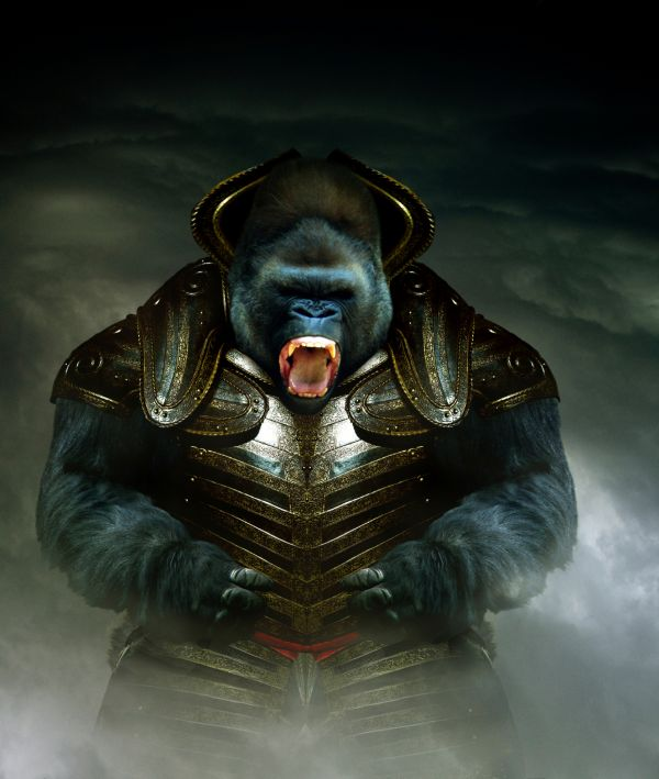 warhammer gorilla photoshop picture