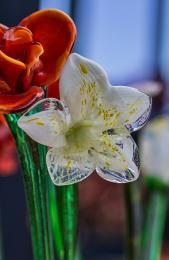 Glassflowers