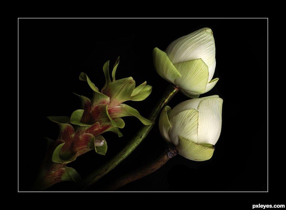 Art of Folding the Lotus Flower