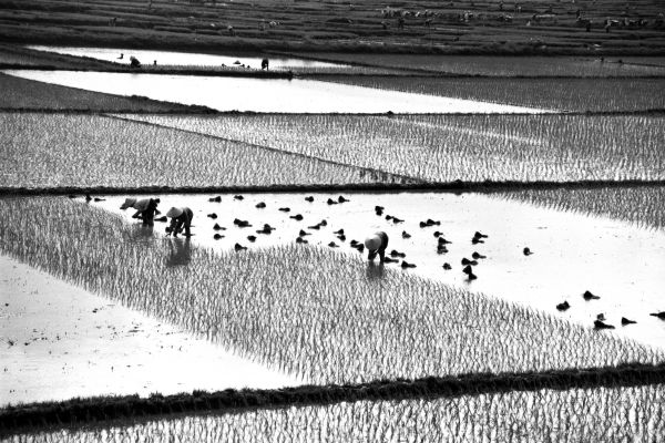 Rice Paddies photoshop picture