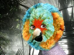 ParrotGirl