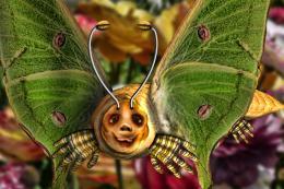 LunaTunaButterfly