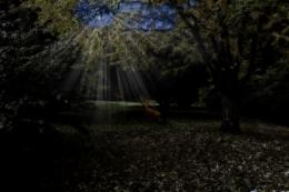 Moonlit Glade Picture