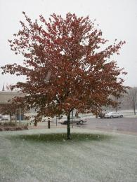 AutumnSnowTree
