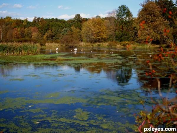 Autumn pond scene