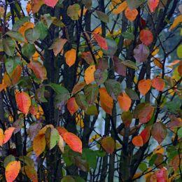 Autumnisasecondspring