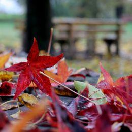 Autumnsdance