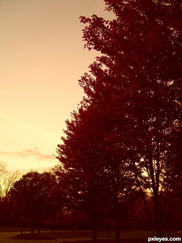 Autumn At Sunset