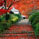 autumn photography contest