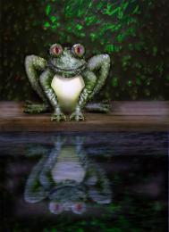 Avo Cado Frog