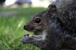 LittleSquirrel