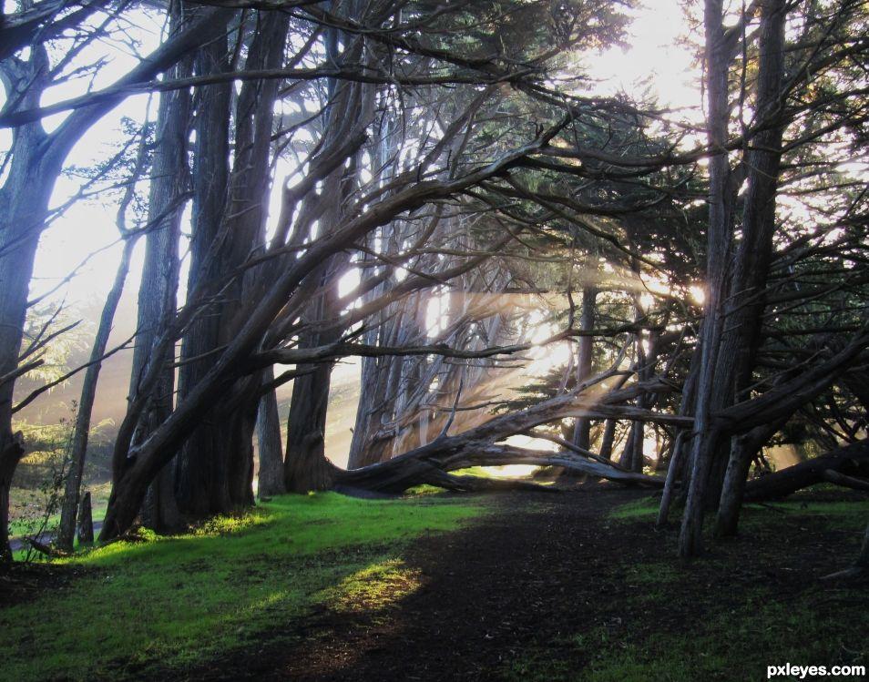 Sunrise trail